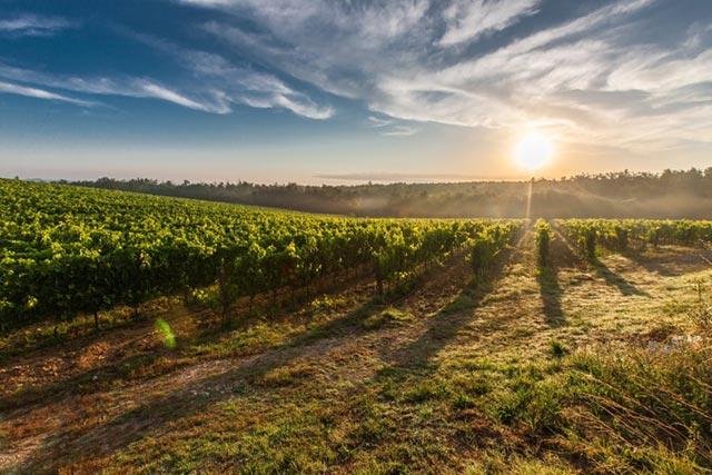 Matériel viticole