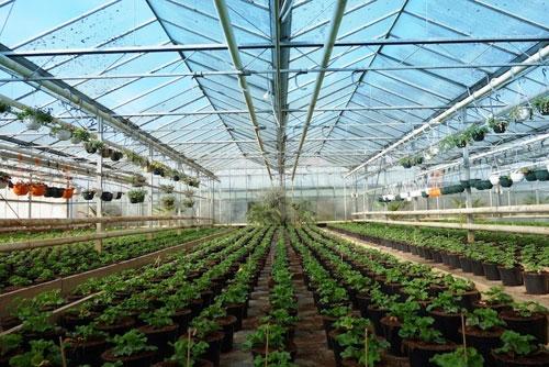 Maraîchage et Horticulture